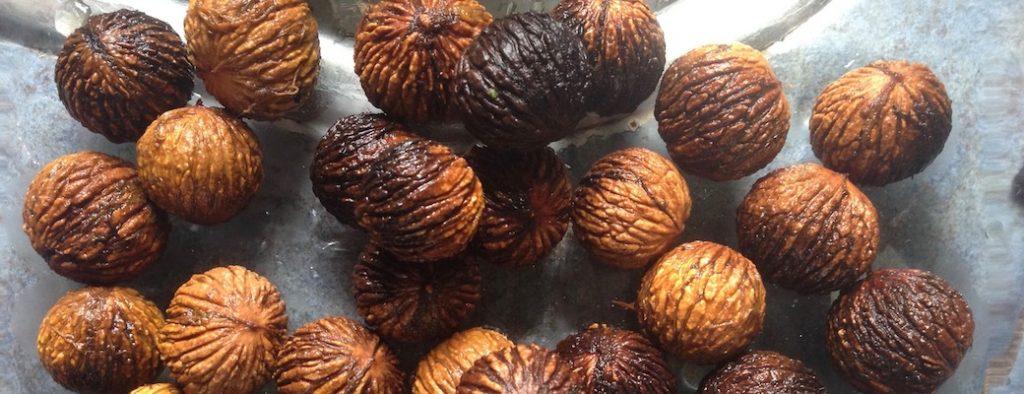 Locally harvested black walnut seeds.