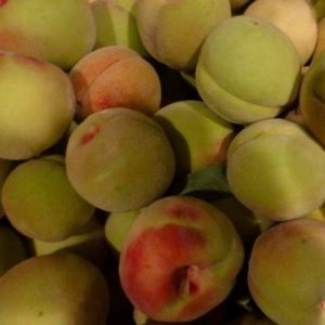 Siberian C Hardy Peach