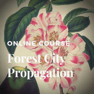 Forest City Propagation Course, Plant Propagation Course
